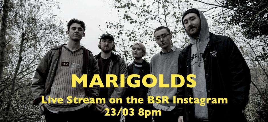 Marigolds BSR LIVE